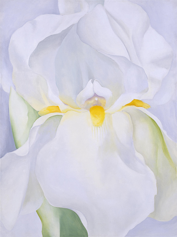 Georgia O'Keeffe White Iris No. 7