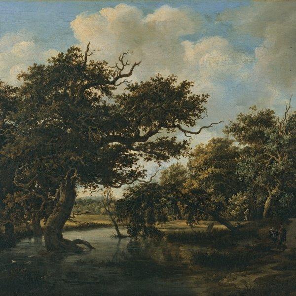 Bosque pantanoso
