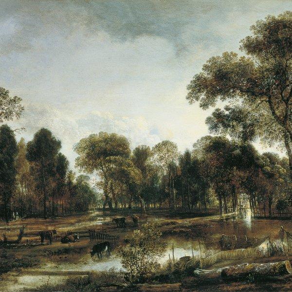 Bosque con un río