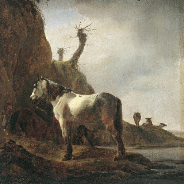 Caballo blanco a la orilla de un río