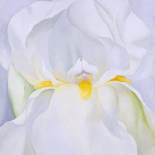 White Iris No. 7